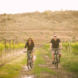 Bicycling Through Wine Country