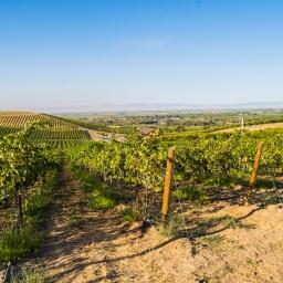 Celebrate Washington Wine Month!