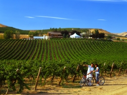 Bike Through Yakima Valley Wine Country!