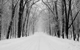 Winter Trail Walks