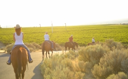 Wine Country Trail Rides