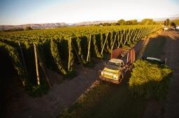 Experience Hop Harvest