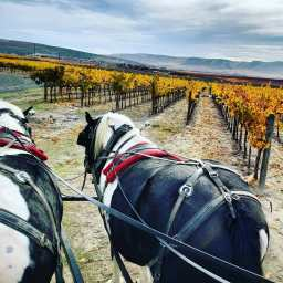 Winery Winter Hours